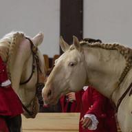 The Buckeburg Princely School of Riding