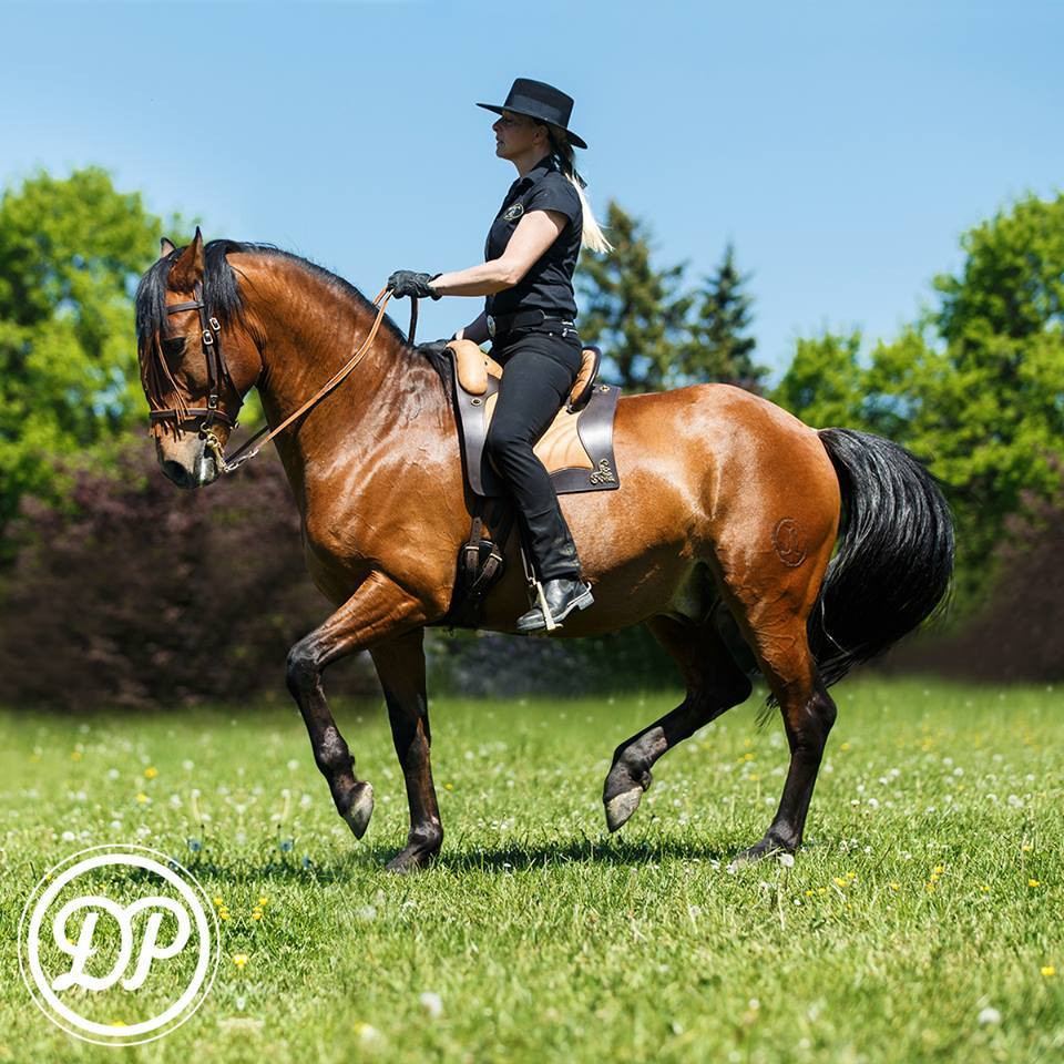 Espera Saddle | DP Saddlery | Australia
