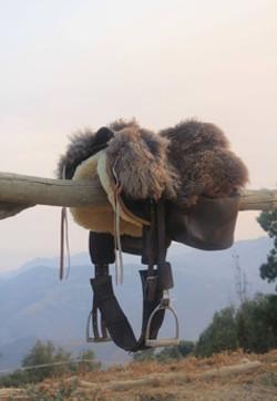 GHOST Maremma Saddle