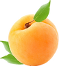 63-637458_apricot.png