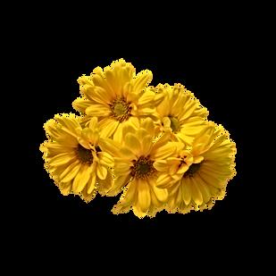 Gerbera-PNG-Image-Background.png