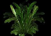 tall-grass-clipart-22.png