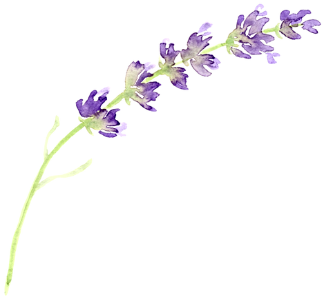 lavender-clipart-lavender-floral-3.png