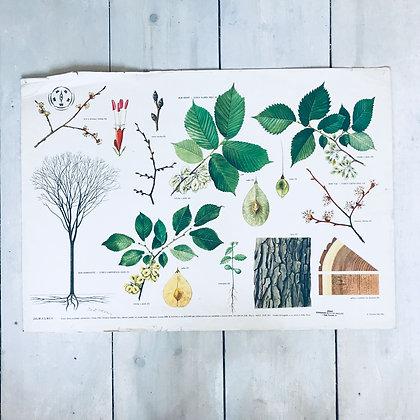 Mid-century soviet school Poster-Tree