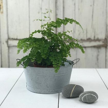 Zinc Bowl-large