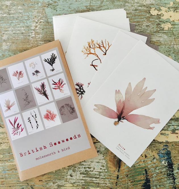 New British Seaweed Postcards