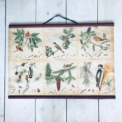 Mid-century soviet school Poster-Birds