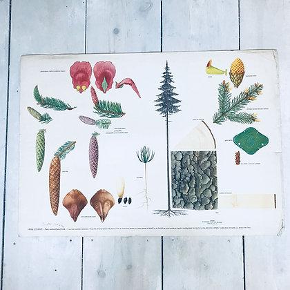 Mid-century soviet school Poster-Conifer