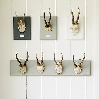 Single Deer Horn Plaque