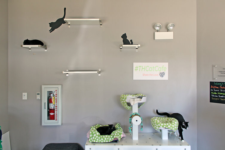 Tree House Humane Society cat shelter room | Chicago