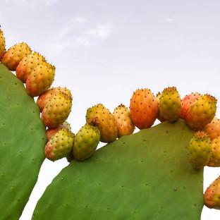 Fichi d'India fruits!