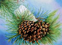 Winter Pine (Winter)