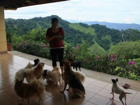 Costa Rica 405249_501718336514569_206617