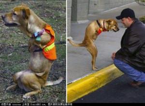 faith dog