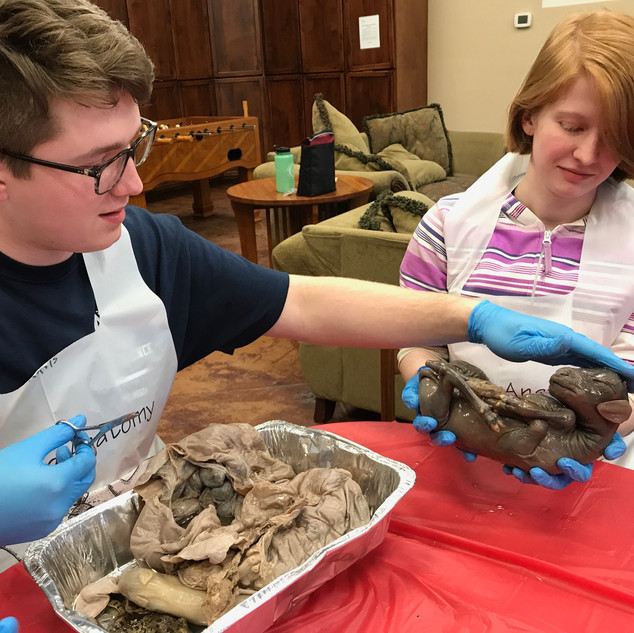 Homeschool Science Biology & Chemistry Two Day Lab Intensives - Marble Falls, Texas