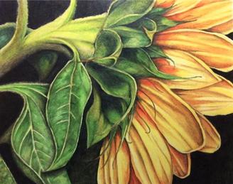 Sunflower (Summer)