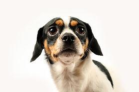 scared-dog.jpg