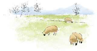 Watercolor%20sheep%20in%20field_edited.p