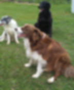 3 dogs looking left cropped 2018.jpg