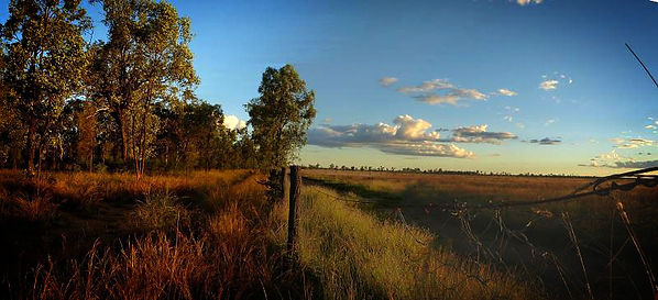 Bimblebox Nature Refuge that will be destroyed by Waratah coal's mine if it goes ahead