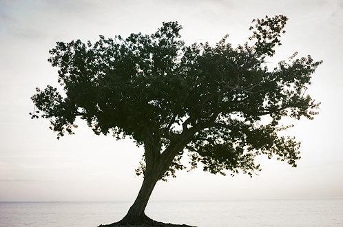 Árbol y mar caribe