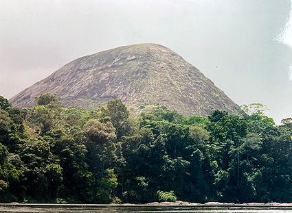 forêtamazonienne3lr.jpg