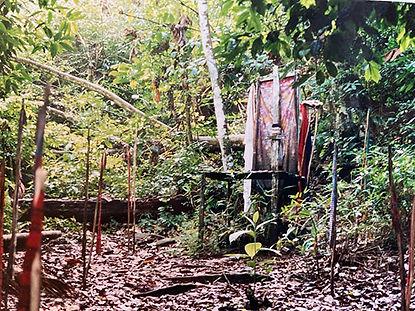 forêtamazonienne2lr.jpg