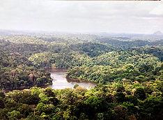 forêtamazoniennelr.jpg