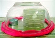 2 Bacteria Yogurt.jpg