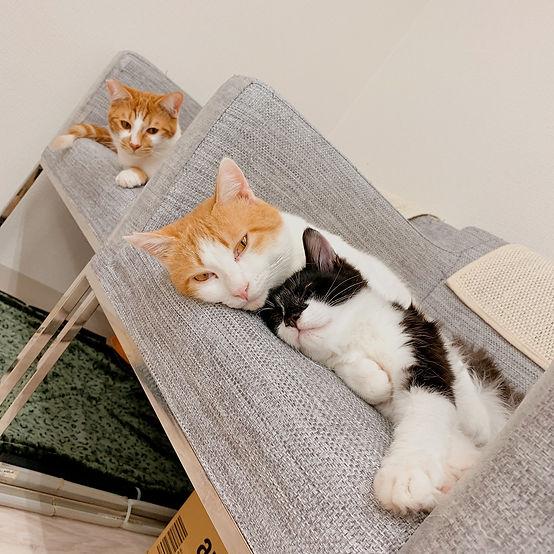 ボン・ムサシ・コウシ CATS WELCARE