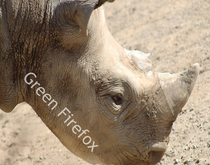 Black Rhino Wall Decal (Original)
