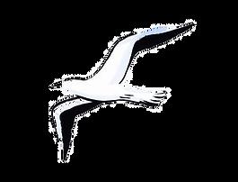 Flying Bird - Symbol of Mental Health