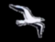 Flying Bird - Symbol of Psychological Freedom