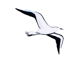 Flying Bird - Symbol of Psychological Freedom