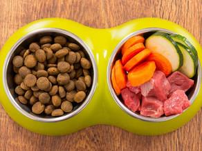 Alimentação para cães