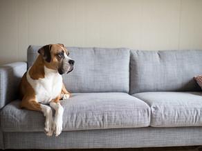 Volta à rotina: saiba como acostumar o seu cão ao final da quarentena