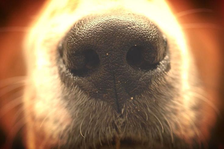 FitDog Adestramento e Consultoria Coportamental Canina