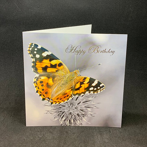Birthday Card - Butterfly - ColourSplash Collection