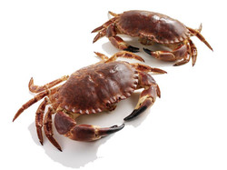 crab whole cooked