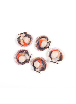 queen scallops half shell