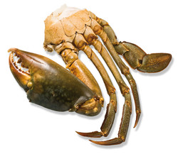 Mangrove crab pieces