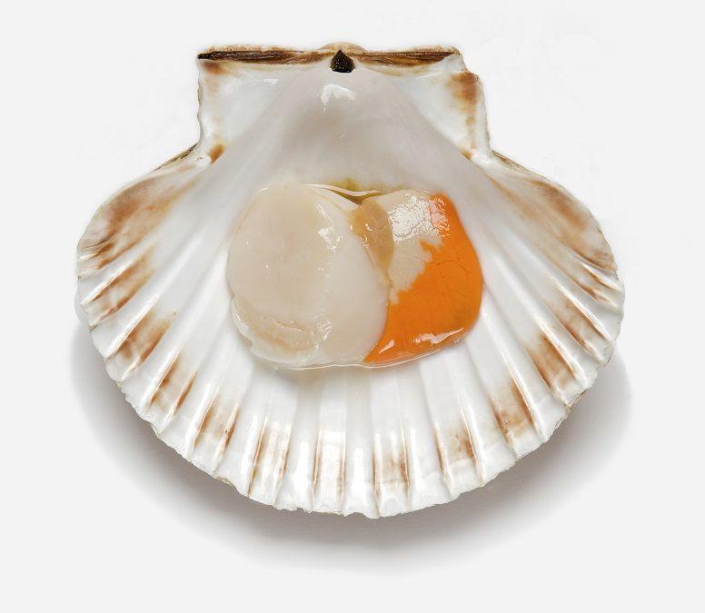 king scallops half shell