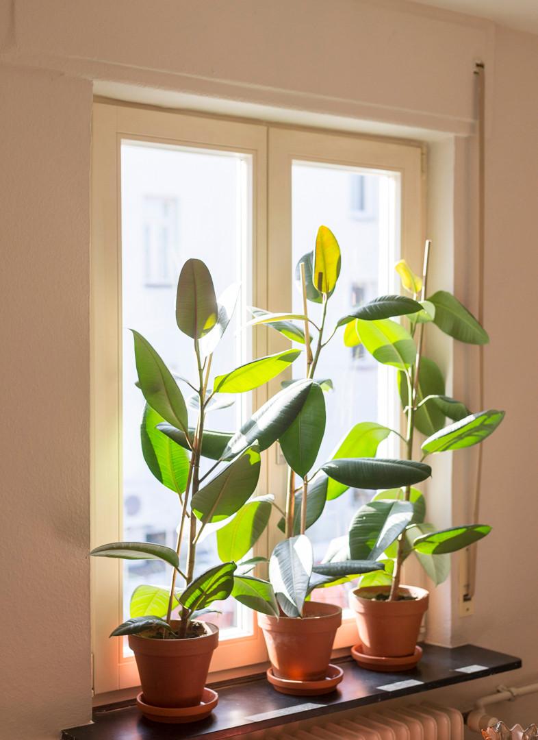 Gastzimmer-Heimat_Fenster zum Hof