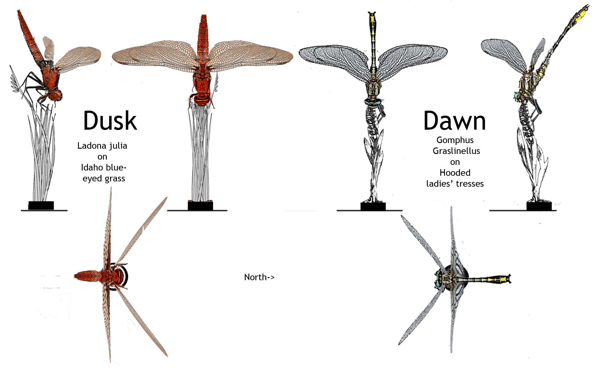 Dusk+Dawn elevation+section