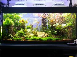 freshwater aquarium aquascaping