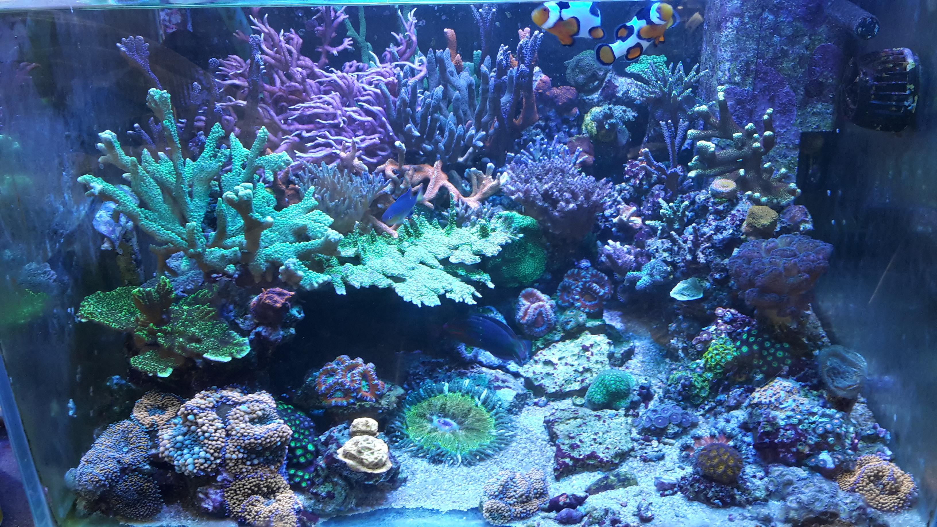sps lps marine saltwater