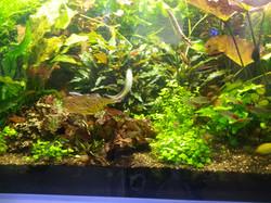 design aquarium Surrey