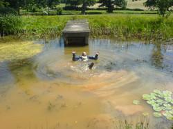natural pond Sussex
