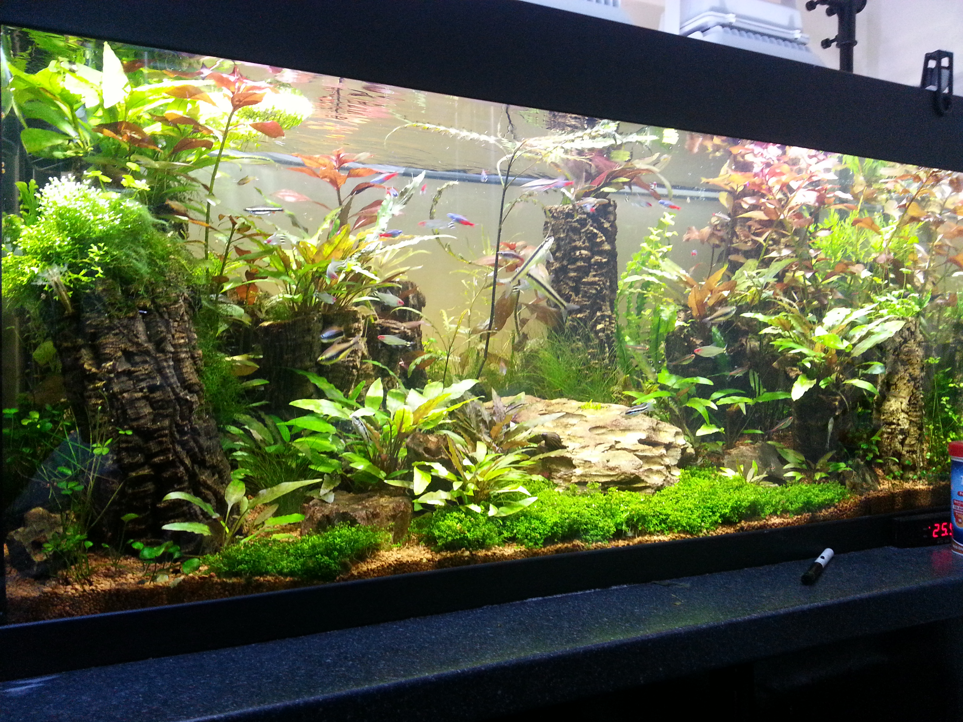 freshwater aquarium cleaning