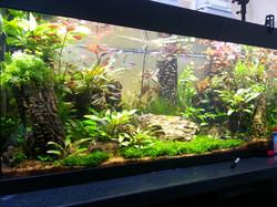 freshwater aquarium cleaning
